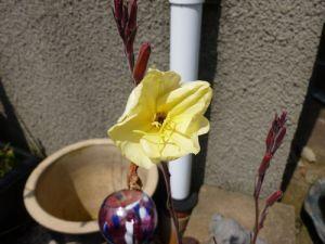Garden Ev Prim