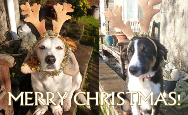 Xmas Puppies Blog.jpg