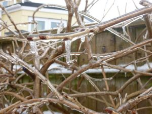 Branch 1