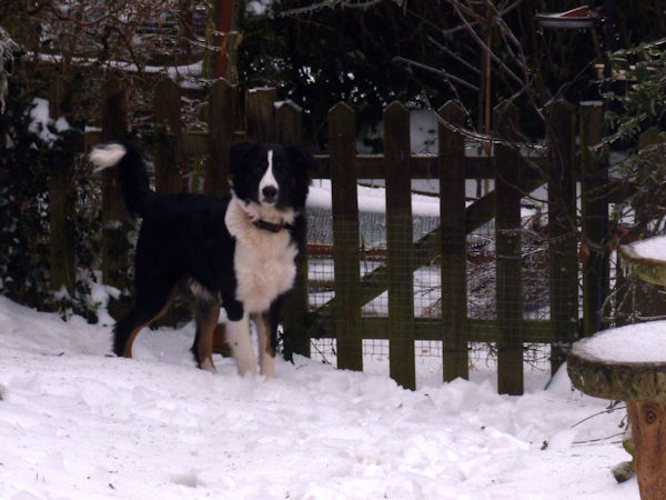 Bru In Snow 1
