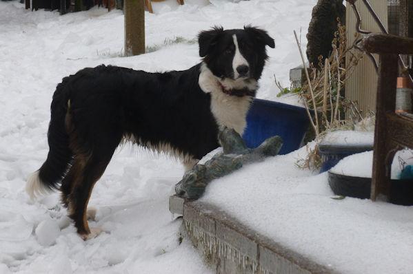 Bru In Snow 3