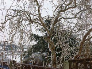 Ice Tree 1