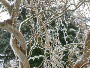 Ice Tree 2