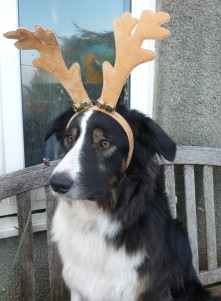 Bru waits for Santa! (While behind him is a lesser-spotted Naldi bird)